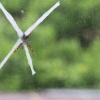 蜘蛛の巣(凄い発見です)