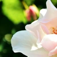 デジブック 『花フェスタ記念公園』