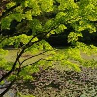 神戸市立森林植物園 2