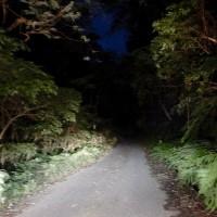 林道脇に現れた  オシドリ