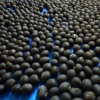 今年の黒豆