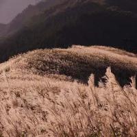地元の山「岩湧山」〈897,7㍍)のススキと夕日