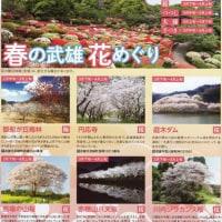 桜の名所in武雄