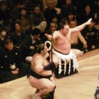 大相撲夏場所中盤戦