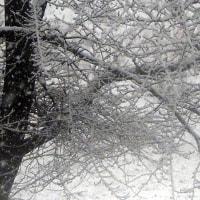 今朝は初雪です