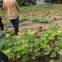 グリーンツーリズム(農業体験)に参加