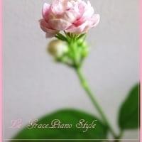 ピカケ*ジャスミンの花♡