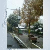 雪と紅葉・・・見沼代親水公園