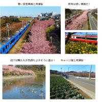 河津桜と富士山と回転寿司!(H29.2.14)