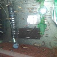 水槽内のローテーション