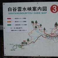 白谷雲水峡の短いルートをゆっくり歩く