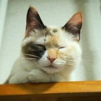 よく寝てますよ(ΦωΦ)