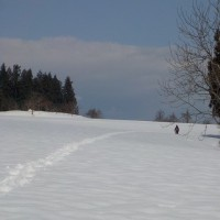 山の畑に行ってみた(その3ウサギだー)