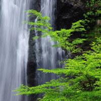 緑の原不動滝