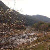 川辺に春を求めて。