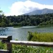 利尻島でも森林浴
