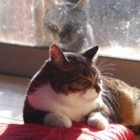 中の猫と外の猫