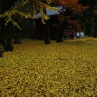 三瀬曲渕の紅葉8(ヨシ)