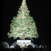 函館からクリスマスツリー