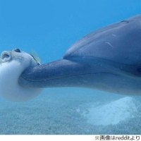 フグは愛すべきお魚