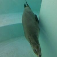 リニューアルした水族館に行ってみた