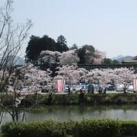丹波・篠山城址の桜は青空バックに輝いて見えました。