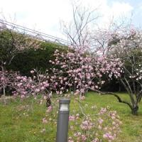 水彩画・お花見・旅行