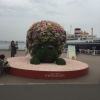 花を見に行きました