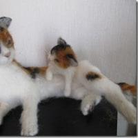 三毛猫:子猫