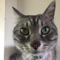 高級猫??