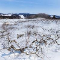残雪たくさん、それでも近づく弘前の春