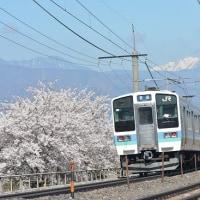 4月23日撮影 その3 みどり湖にて桜とpart1