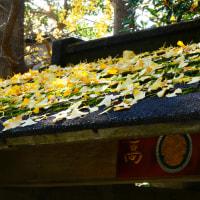 『高来神社』 手水舎