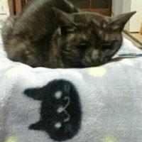 黒猫ふたつ