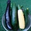 高温続きで、野菜たち愚図り??