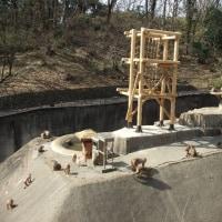 トンボ橋完成の多摩動物公園