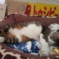 地域猫たち、梅、銀次~(=^ェ^=)