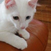 白い子猫がやって来た♪