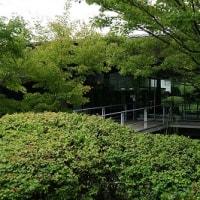 第161回古都旅歩き 三室戸寺、源氏物語ミュージアム