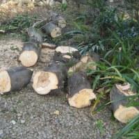 庭木伐採の後始末