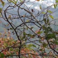 洋梨と山の話