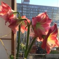 去る花と次を彩る蕾