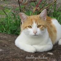 猫の小春日和
