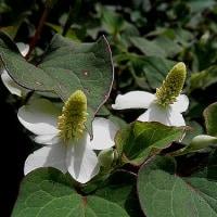 利益追求 密やかに サービス 華麗な花