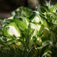 植物たちのようす・・・つづき 4月28日