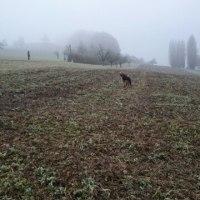 今日も霧。