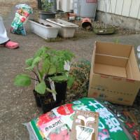 スタッフ農園…始まり