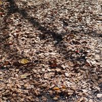 枯葉に映る影