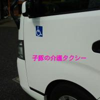 子豚介護タクシー