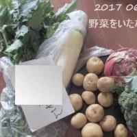 0625 眠い日曜の記録・採りたて野菜